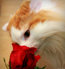 Always Take Time to Smell the Roses sm