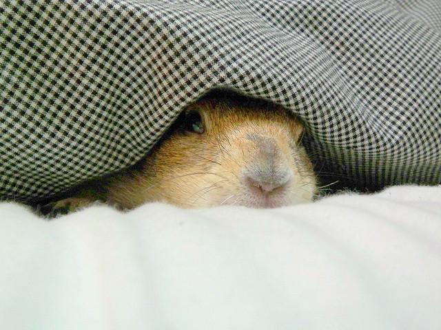 let's get sleep