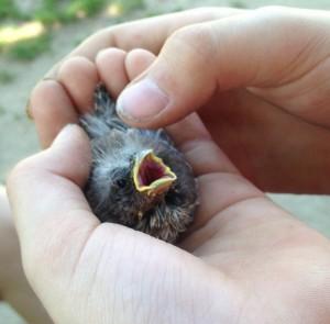 Zombie Birdie
