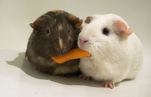 sharing a carrot
